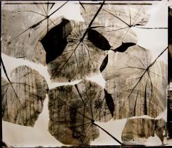 Leaves-no-1/4-2005-110x125cm