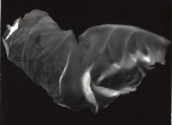 Butterfly-2a-2005-24x30cm
