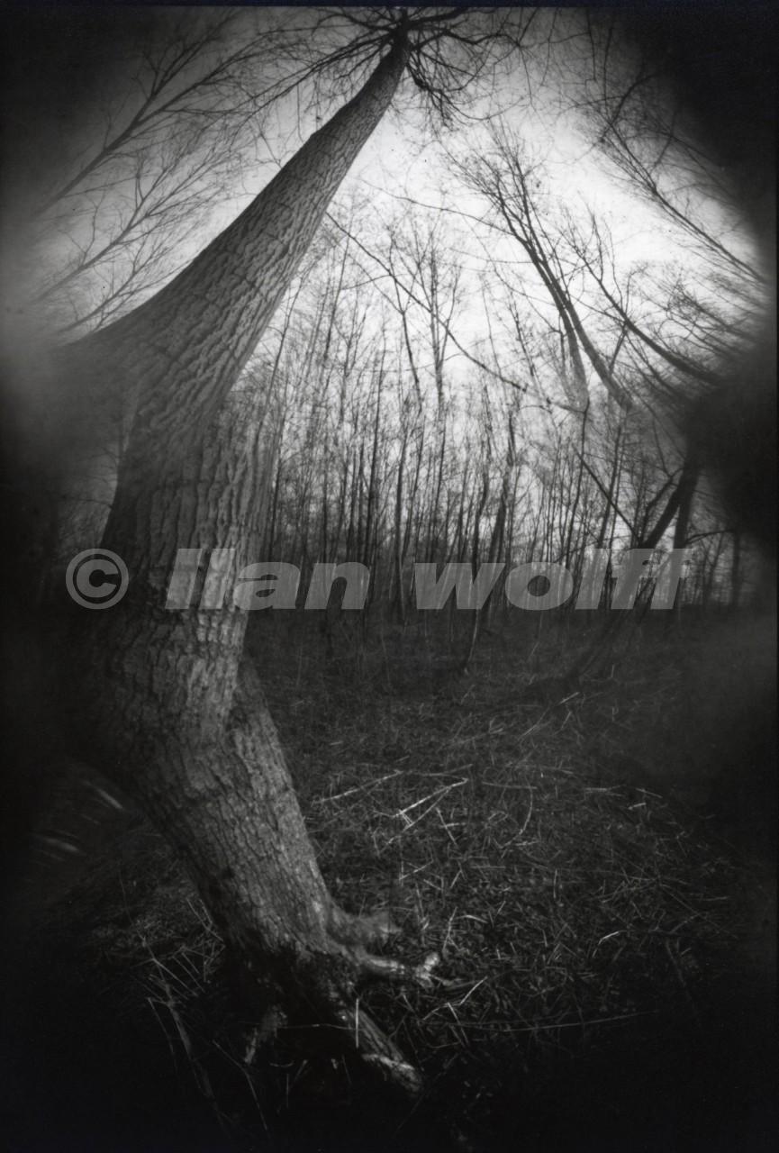 Trees-1/France/1998/20x30cm
