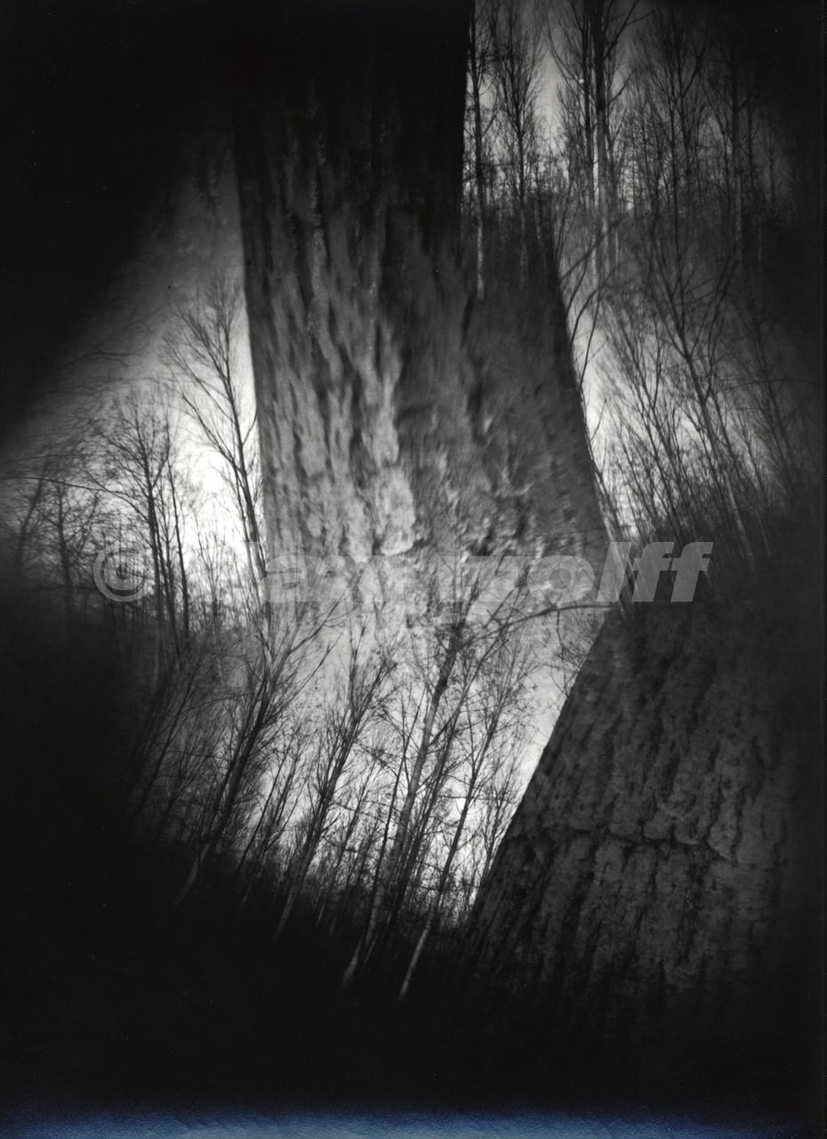 Trees-2/France/1998/24x30cm