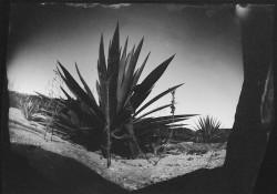 Cactus-from-red-peppar-camera/2004/17x11cm