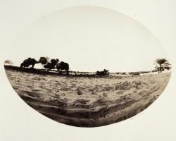 life-in-the-desert-Negev-3/Israel/1984/50x45cm