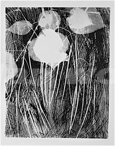harict-vert-nega2005-2012photogram---copie