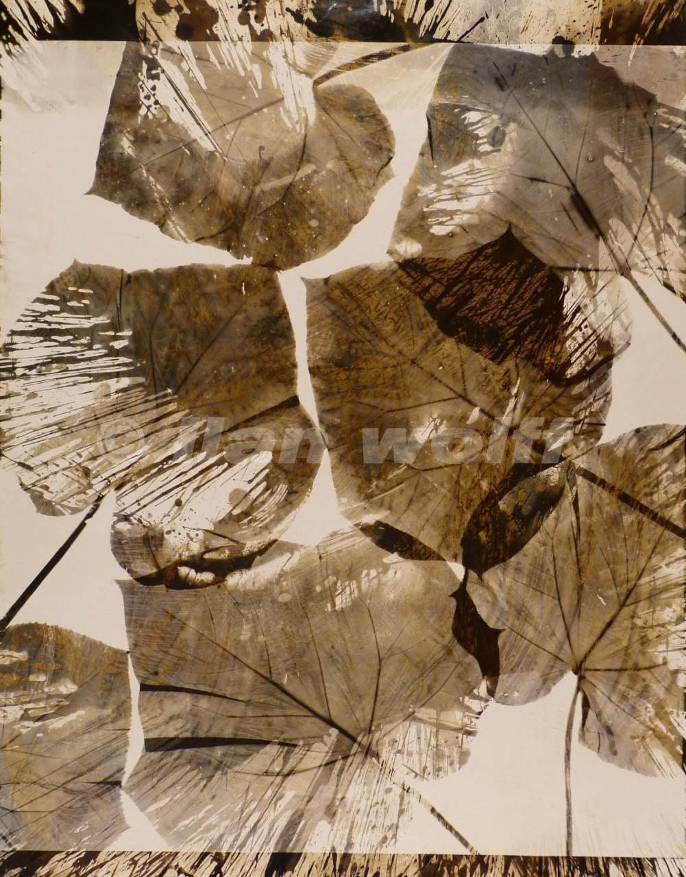 leaves-no-1/2-2005/12-125x165cm