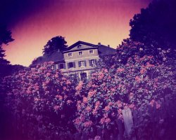 0661 - House with flowers 1